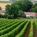 L'écrin des vignes | Les vignes | Copyright http://www.ecrin-des-vignes.fr/